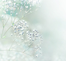 Pastel Toned White Flowers