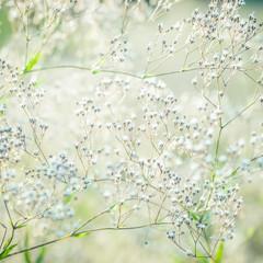 Fototapeta Optyczne powiększenie Pastel toned white flowers