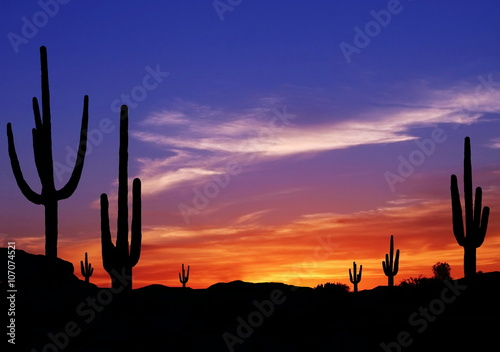 Photo Stands Arizona Colorful Sunset in Wild West Desert of Arizona with Cactus