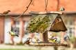 Leinwandbild Motiv Traffic at the Bird Feeder