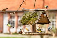 Traffic At The Bird Feeder