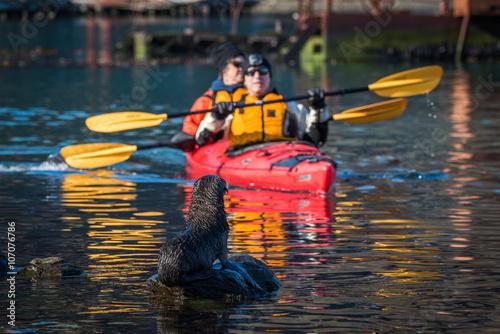 Twin kayak passing Antarctic fur seal pup Canvas Print