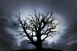 oak tree with moon - 107081925