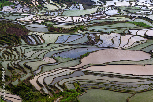 Poster Rijstvelden Terraced rice fields in water season in Yunnan province, China.