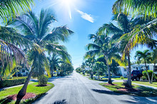 Way To The Beach With Palm Tre...