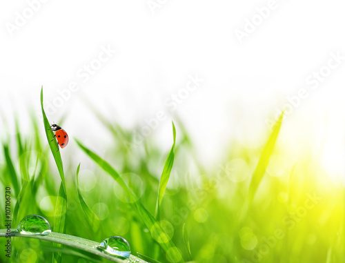 Fresh green grass with dew drops and ladybug closeup. Soft Focus. Nature Background