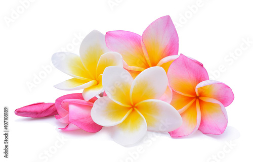 Deurstickers Frangipani frangipani isolated on white background
