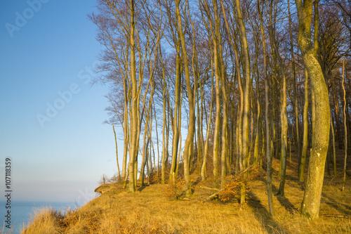 Fotografie, Obraz  Buczyna źródliskowa na klifie w Wolińskim Parku Narodowym