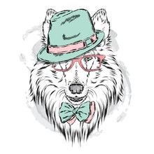 Pedigree Dogs Painted By Hand. Collie Wearing A Hat And Sunglasses. Vector Illustration.
