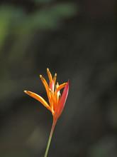 The Vertical Orange Flower