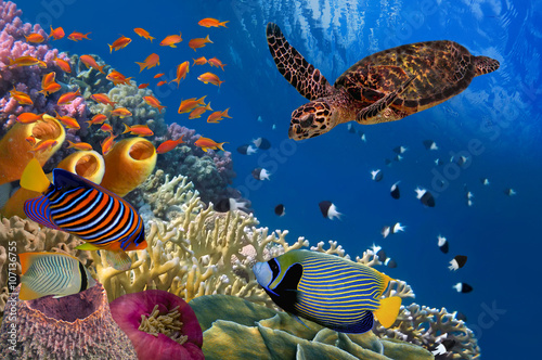 Poster Sous-marin Colorful coral reef with many fishes and sea turtle