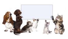 Dachshund Dog Paws Holding Banner