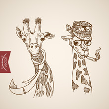 Giraffe Head Hipster Style Engraving Lineart Vintage Vector