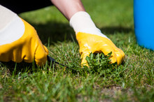 Cutting Out Weeds / Man Remove...