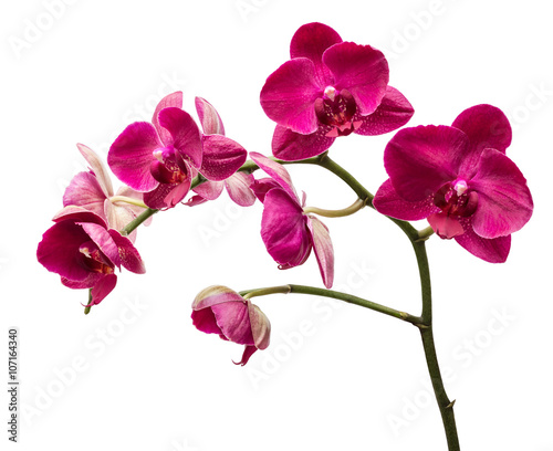 Foto op Canvas Orchidee Orchid flowers isolated on white background