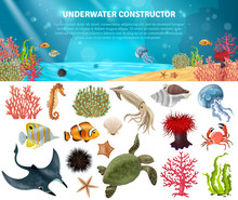 Sea Life Constructor Isolated ...