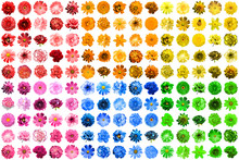 Mega Pack Of 150 In 1 Natural And Surreal Blue, Yellow, Red, Pink, Green And Orange Flowers Isolated On White