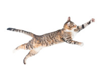 Funny Cat Flying In The Air Is...