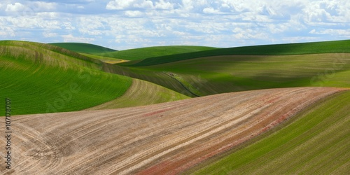 Tuinposter Heuvel Corn fields at the rolling hills farmland. Palouse Hills in Washington, United State of America.