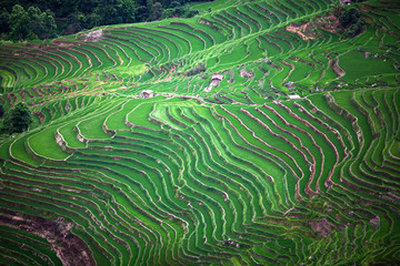 FototapetaTerraced rice fields in Yuanyang county, Yunnan, China
