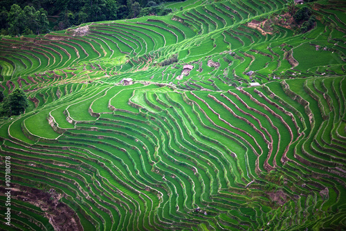 Foto auf Gartenposter Reisfelder Terraced rice fields in Yuanyang county, Yunnan, China