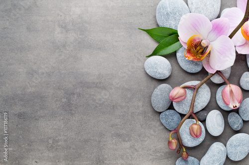 spa-orchid-theme-objects-on-grey-background