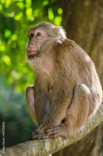 In de dag Assam macaque on the tree