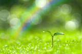Fototapeta Rainbow - 森の中の芽生え