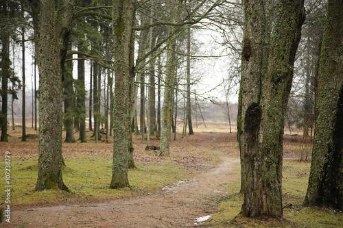 Fotografie, Obraz  path in the park
