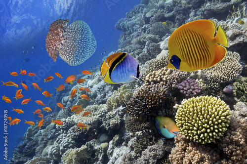 Poster Sous-marin Wonderful and beautiful underwater world with corals and tropica