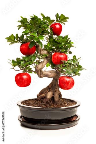 Papiers peints Azalea bonsai tree with big apple isolated on white