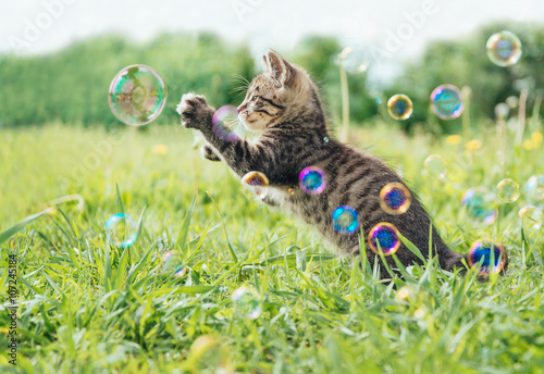 Foto op Aluminium Kat Kitten playing with soap bubbles