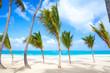 Small palm trees grow on empty sandy beach