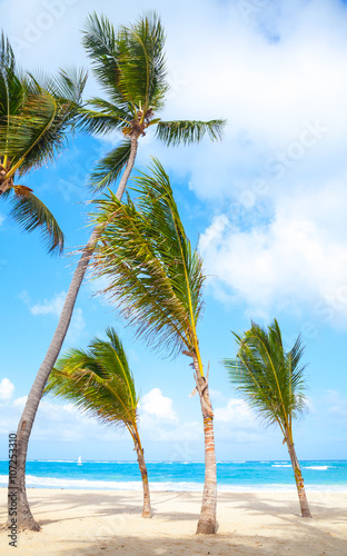 Spoed Foto op Canvas Natuur Palm trees grow on empty sandy beach