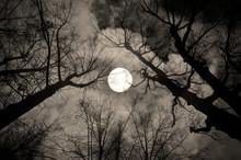 Gothic Night Landscape In Sepia Tones