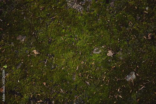 фотография  Background of moss surface