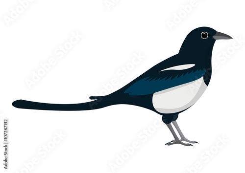 magpie cartoon vector illustration. Wallpaper Mural