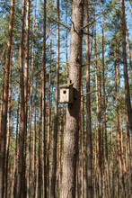 Shed For Birds In The Forest