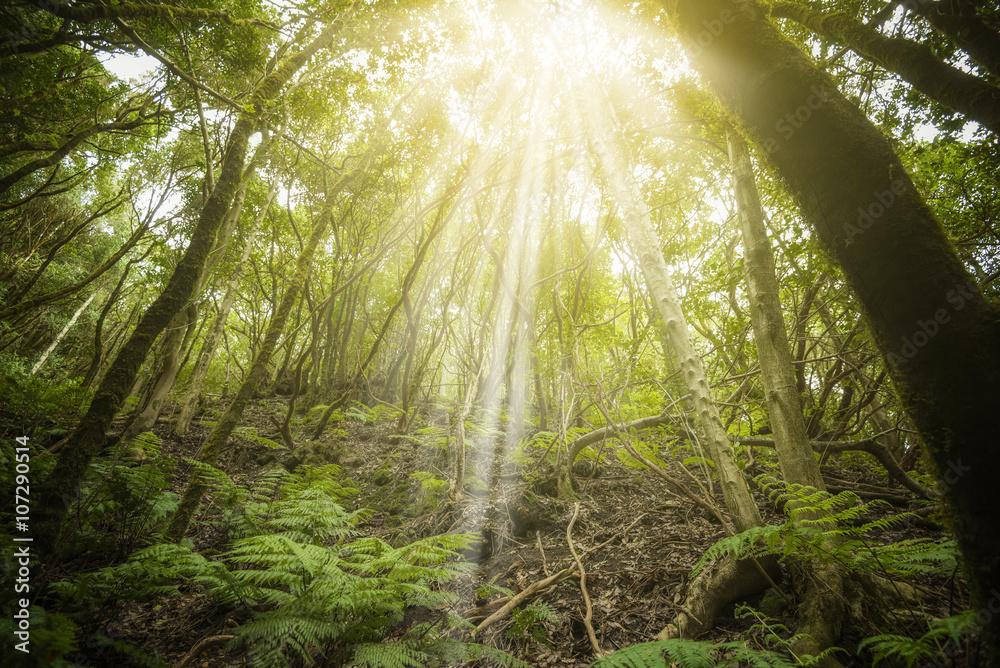 Fototapety, obrazy: Bosque tropical en las Islas Canarias