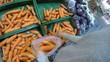 Vegetables at Farmers Market. Organic Carrot in Supermarket. UHD.
