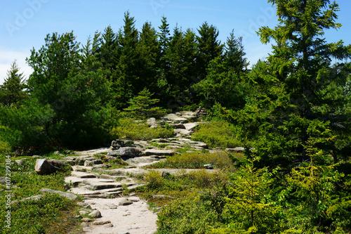 Fotografie, Obraz  Steep stony trail through the green fir forest in a bright sunlight