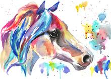 Horse Head. Color Watercolor I...