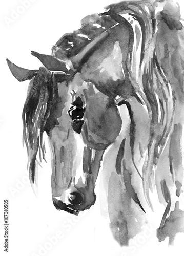 glowa-konia-czarno-biala-akwarela-ilustracja-recznie-rysowane
