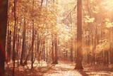 landscape autumn path in the park