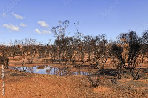 Poster Afrique WA burnt outback puddle