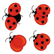 Cartoon Ladybug - Isolated - Illustration For The Children