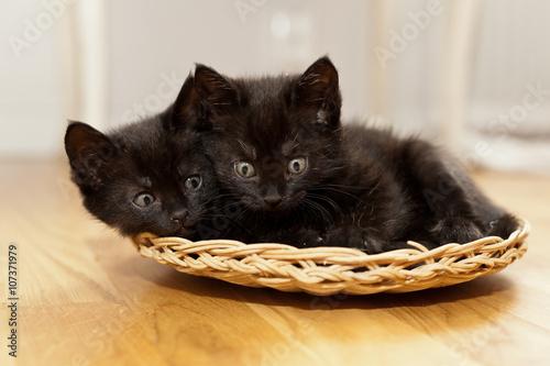 Fényképezés  två svarta kattungar i en korg