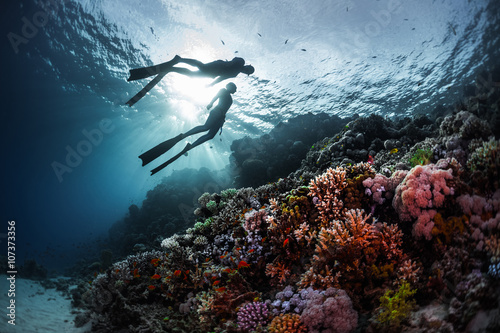 Free divers Wallpaper Mural