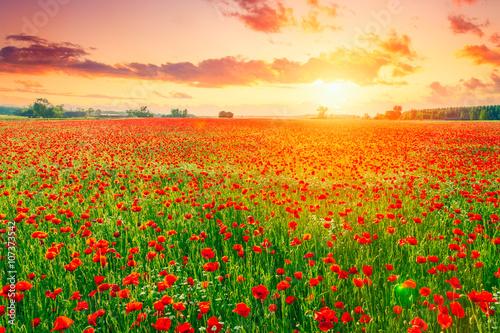 Foto op Plexiglas Weide, Moeras Poppies field meadow in summer
