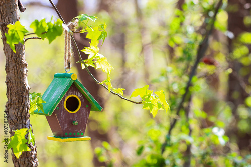 Carta da parati Brown birdhouse hanging from branch with spring foliage